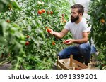 organic farmer checking his... | Shutterstock . vector #1091339201