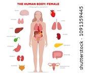 human anatomy infographic... | Shutterstock .eps vector #1091359445