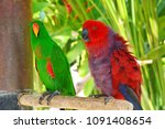green and red parrots | Shutterstock . vector #1091408654