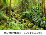 lush tropical vegetation of the ... | Shutterstock . vector #1091411069