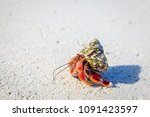 hermit crab crawling on a beach ... | Shutterstock . vector #1091423597