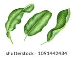 realistic tropical botanical... | Shutterstock . vector #1091442434