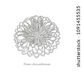 monochrome chrysanthemum flower ... | Shutterstock .eps vector #1091455535