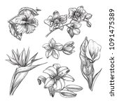 tropical flowers set  vector... | Shutterstock .eps vector #1091475389
