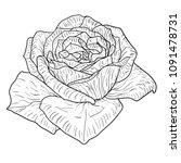 beautiful monochrome sketch ... | Shutterstock . vector #1091478731