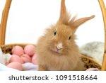 rabbit brown in basket on white ... | Shutterstock . vector #1091518664