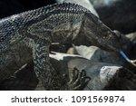 photo of a pretty rad lizard | Shutterstock . vector #1091569874