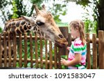 family feeding giraffe in zoo.... | Shutterstock . vector #1091583047