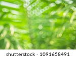copy space of blur palm leaf... | Shutterstock . vector #1091658491