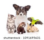 Stock photo group of pets together in front view isolated on white background 1091695631
