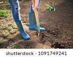 work in a garden   digging... | Shutterstock . vector #1091749241