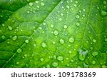 natural green background with... | Shutterstock . vector #109178369