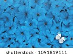 creative layout made of blue... | Shutterstock . vector #1091819111