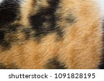 close up white  brown and black ... | Shutterstock . vector #1091828195