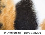 close up white  brown and black ... | Shutterstock . vector #1091828201