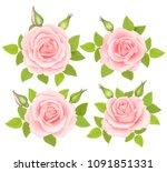 set of roses flowers. vector...   Shutterstock .eps vector #1091851331