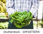 organic vegetables. farmers... | Shutterstock . vector #1091873054