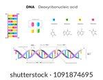 molecular structure of dna....   Shutterstock .eps vector #1091874695