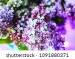 beautiful bouquet of fragrant... | Shutterstock . vector #1091880371