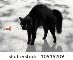 Stock photo black cat with haunches up 10919209