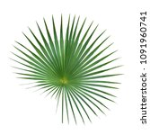 palm leaf isolated on white... | Shutterstock . vector #1091960741