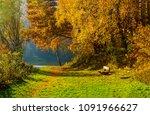 Autumn Park Bench Landscape....