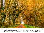 autumn forest road landscape.... | Shutterstock . vector #1091966651