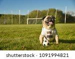 brilon  north rhine westfalia ... | Shutterstock . vector #1091994821