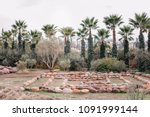 landscape with palm trees in... | Shutterstock . vector #1091999144