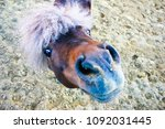 pony looks with curiosity | Shutterstock . vector #1092031445