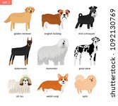 dog breeds. vectors dogs... | Shutterstock .eps vector #1092130769