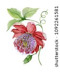 beautiful red and purple... | Shutterstock . vector #1092261581