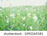 white flowers forest grass... | Shutterstock . vector #1092265181