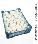 mushroom champignon familly | Shutterstock . vector #1092283811