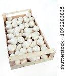 mushroom champignon familly | Shutterstock . vector #1092283835