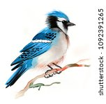 watercolor blue jay | Shutterstock . vector #1092391265