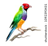 watercolor sketch of a colorful ... | Shutterstock . vector #1092393431