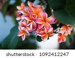 focus on peach colored...   Shutterstock . vector #1092412247