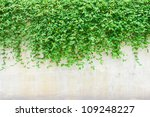 Ornamental Plants On Wall