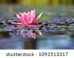 Beautiful Flowering Pink Water...