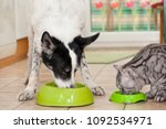 Stock photo dog and cat are fed side by side in the kitchen 1092534971