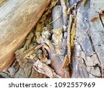 pile of firewood. preparation... | Shutterstock . vector #1092557969