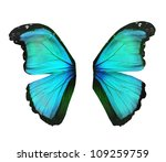 Wings Of Morpho Turquoise...