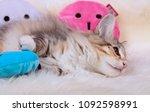 Sweet Norwegian Forest Cat...
