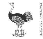 ostrich in boots with spur bird ... | Shutterstock .eps vector #1092648974