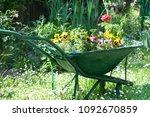 Green Tin Wheelbarrow Full Of...