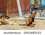 two homeless puppies on the... | Shutterstock . vector #1092685151