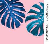 monstera deliciosa or swiss... | Shutterstock . vector #1092689177