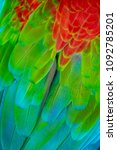 colorful macaw plumage  | Shutterstock . vector #1092785201