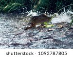 when the salmon are running  ... | Shutterstock . vector #1092787805